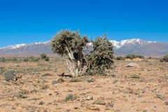 Désert pierreux d'atlas moyen, Maroc Photo libre de droits