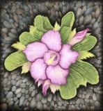 Désert Rose Flowers Photographie stock