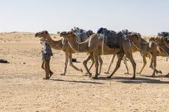 désert Sahara de caravane de chameau Photographie stock