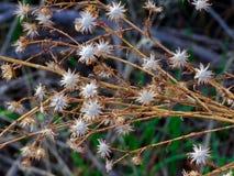 Désert sec de fleurs au printemps images libres de droits