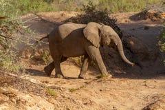 Déserts et nature d'éléphant de désert en parcs nationaux image libre de droits