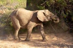 Déserts et nature d'éléphant de désert en parcs nationaux photos stock