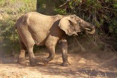 Déserts et nature d'éléphant de désert en parcs nationaux images libres de droits