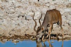 Déserts et nature de Kudu Namibie en parcs nationaux photos stock