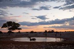 Déserts et nature de la Namibie en parcs nationaux photos stock