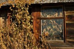 Détail abandonné de cabane en rondins de mur et de fenêtre Photographie stock