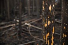Détail brûlé d'arbre Photographie stock