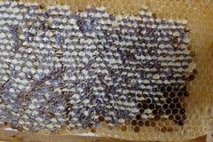 Détail complet de nid d'abeilles photo libre de droits