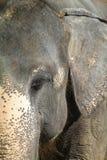 Détail d'éléphant Photos stock