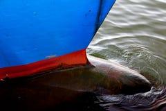 Détail d'abrégé sur nez de bateau Image stock