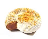 Détail d'ammonites fossilisées Image stock