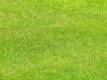 Détail d'herbe Image libre de droits