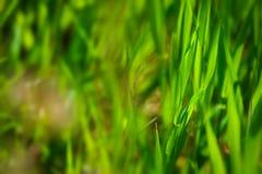 Détail d'herbe Photographie stock