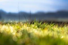 Détail d'herbe avec des gouttelettes de rosée de matin photo stock