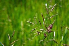 Détail d'herbe de prairie Photos stock