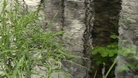 Détail d'herbe et d'eau en ruisseau banque de vidéos