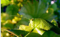 Détail d'insecte Photos libres de droits