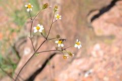 Détail d'insecte en fleur un jour ensoleillé Image stock