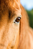 Détail d'oeil d'un cheval Photographie stock libre de droits