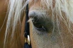 Détail d'oeil de cheval photographie stock libre de droits