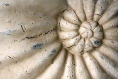 Détail d'ornement en pierre découpé avec la coquille d'ammonite Photo stock