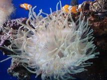 Détail d'un aquarium énorme avec l'espèce marine Images stock