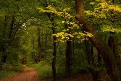 Détail d'un arbre avec les lames jaunes Image libre de droits