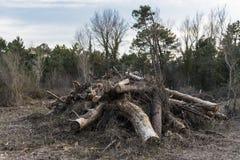Détail d'un tas de bois du feu, énergie renouvelable Photo stock