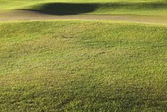 Détail d'une herbe de terrain de golf photographie stock