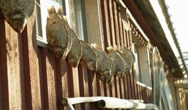 Détail d'une maison de pêche avec les poissons secs Image stock