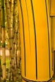 Détail d'une usine en bambou Photographie stock