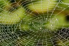 Détail de belle toile d'araignée avec des perles des baisses de rosée Image stock