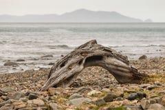 Détail de bois de flottage sur la plage Photo stock