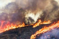 Détail de brûler Hillside avec les flammes oranges grandes d'arbres de brosse et la fumée noire photographie stock libre de droits