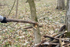 Détail de branche cassée pour la destruction a de tempête Images stock