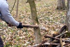 Détail de branche cassée pour la destruction a de tempête Photographie stock