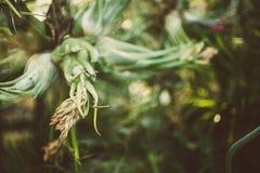 Détail de bromélia dans le jardin botanique tropical photographie stock libre de droits