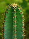 Détail de cactus Photographie stock