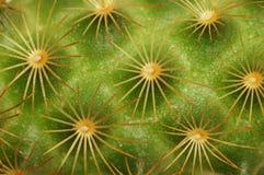 Détail de cactus Photo stock