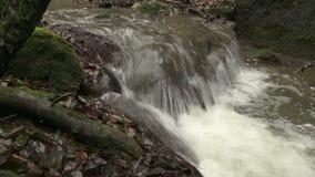 Détail de cascade en ruisseau banque de vidéos