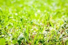 Détail de champ d'herbe Image stock