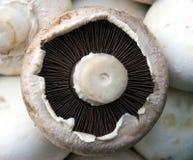 Détail de champignon de couche Photographie stock libre de droits