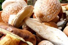 Détail de champignon de couche frais d'automne photos libres de droits