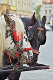 Détail de cheval foncé et noir et blanc Images libres de droits