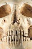 Détail de crâne humain Photographie stock libre de droits