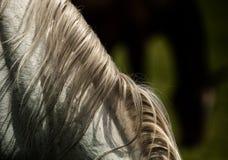 Détail de crinière sur le cheval blanc de retour photo libre de droits