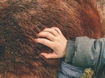 Détail de croissance et de composition de fourrure de cheval image libre de droits