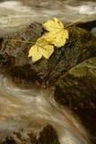 Détail de deux feuilles sur une pierre Photographie stock libre de droits