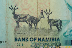 Détail de 10 dollars namibiens de billet de banque Photos libres de droits