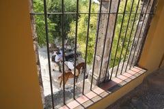 Détail de fenêtre dans l'arène de Baeza pendant la foire dans une corrida Images libres de droits